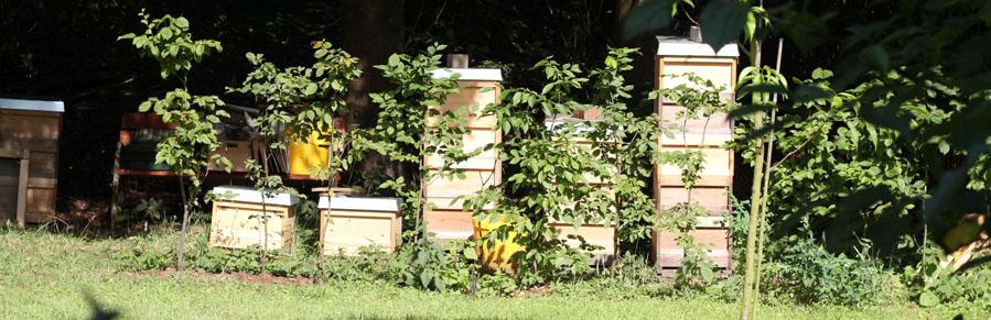 Bienenstöcke am Lehrbienenzentrum